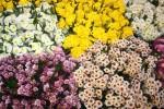 рынок цветов Бангкок