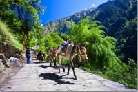 Лошадки по пути к Долине цветов
