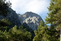Горы в обрамлении сосен