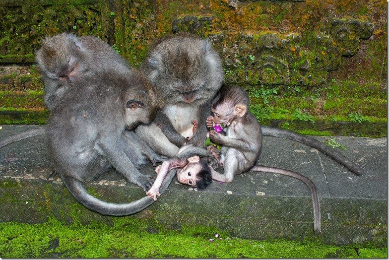 Ubud monkey forest on Bali