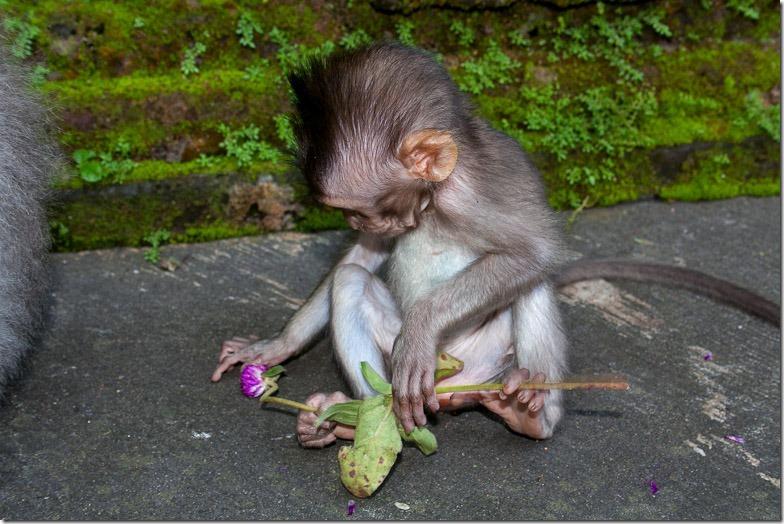 Ubud monkey forest on Bali
