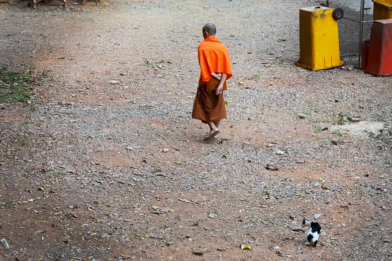 Монах с хвостатым другом на прогулке
